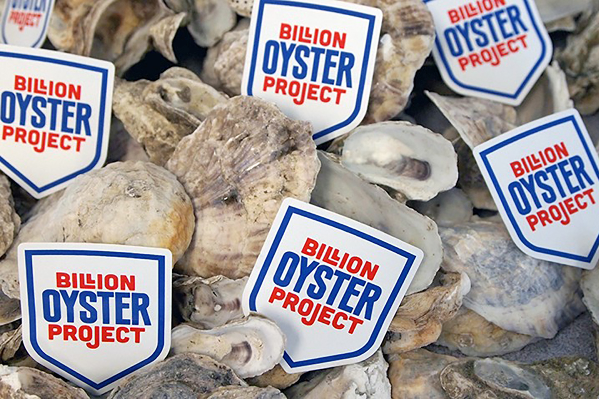 oyster project logo